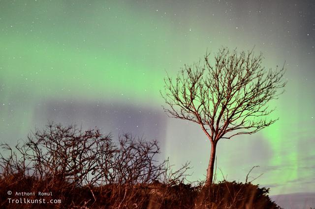 trollkunst7 nordlys frøya north light aurora borealis klæbu kommune tanem northern lights sparebank