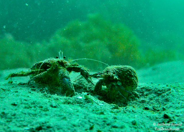 trollkunst.com diving anthoni romul dykking krabbe scuba klæbu mausundvær